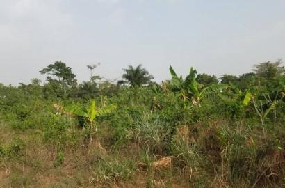 Registered Plot of Land for Sale in Kumasi
